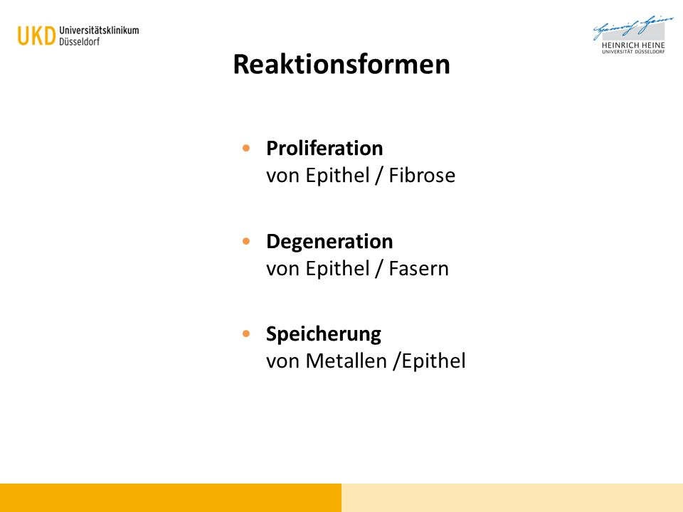 Reaktionsformen Proliferation von Epithel / Fibrose