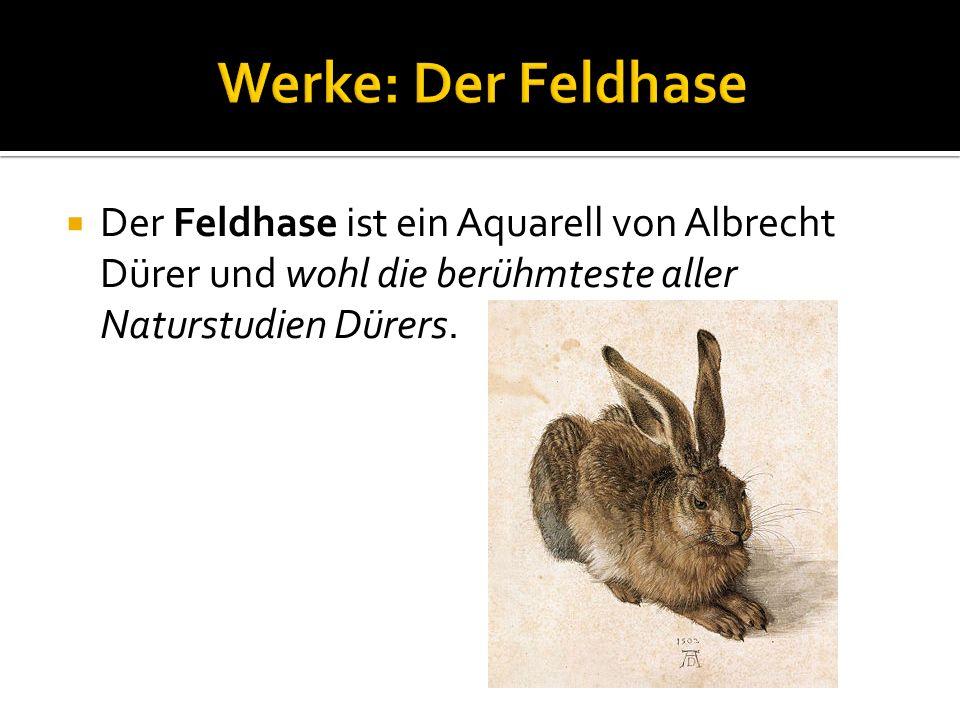 Werke: Der Feldhase Der Feldhase ist ein Aquarell von Albrecht Dürer und wohl die berühmteste aller Naturstudien Dürers.
