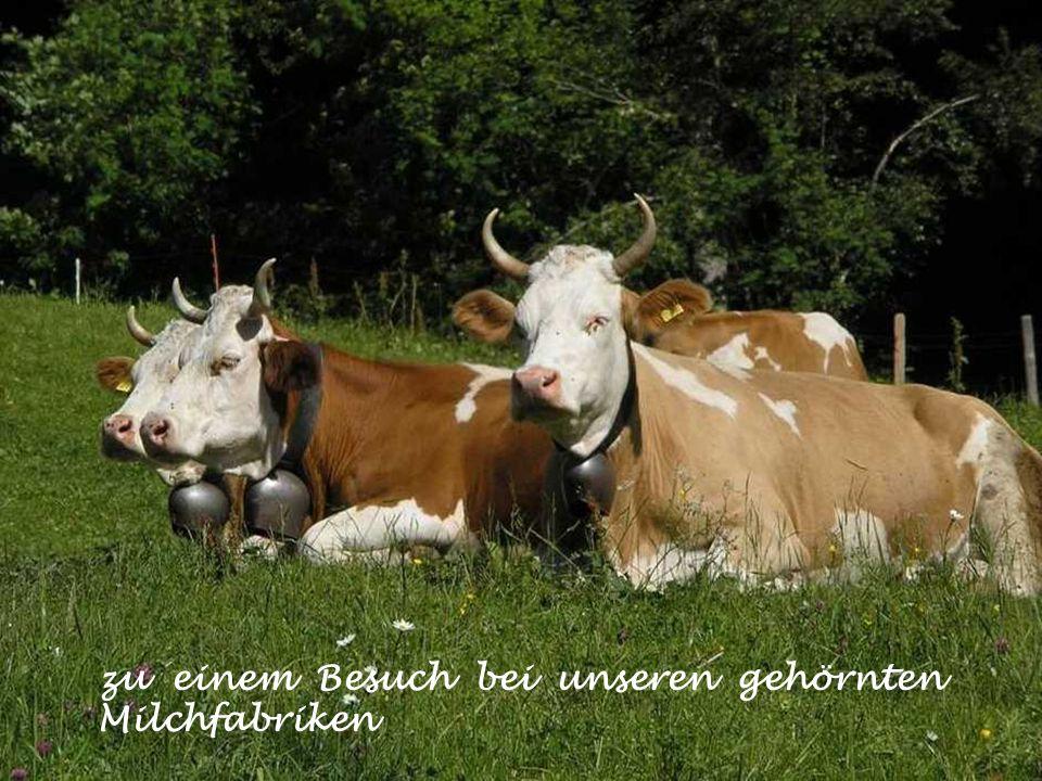 zu einem Besuch bei unseren gehörnten Milchfabriken