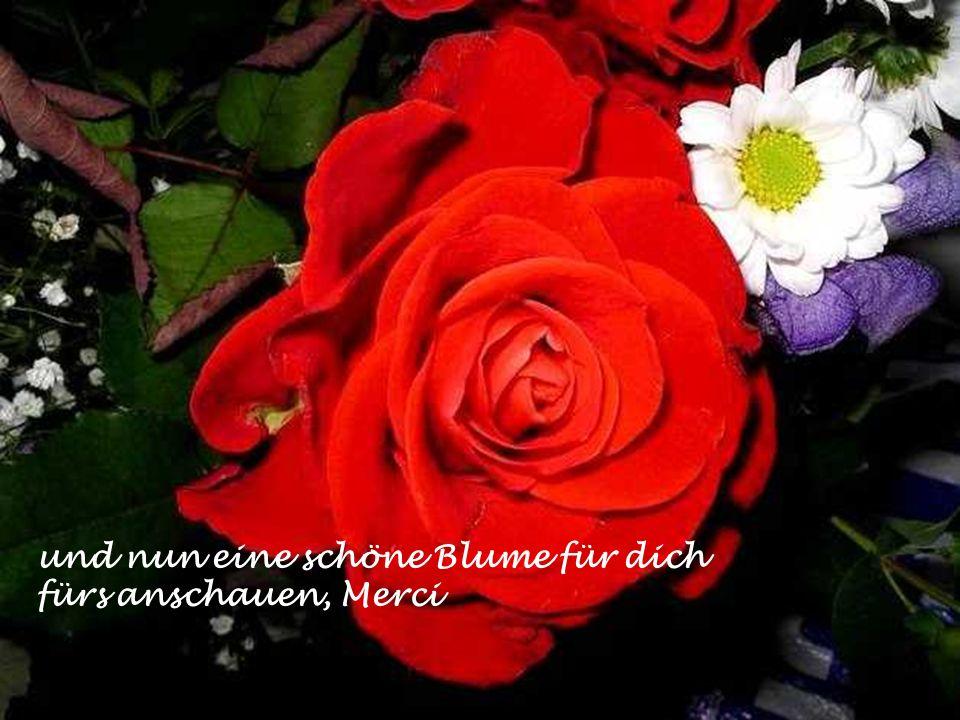 und nun eine schöne Blume für dich fürs anschauen, Merci