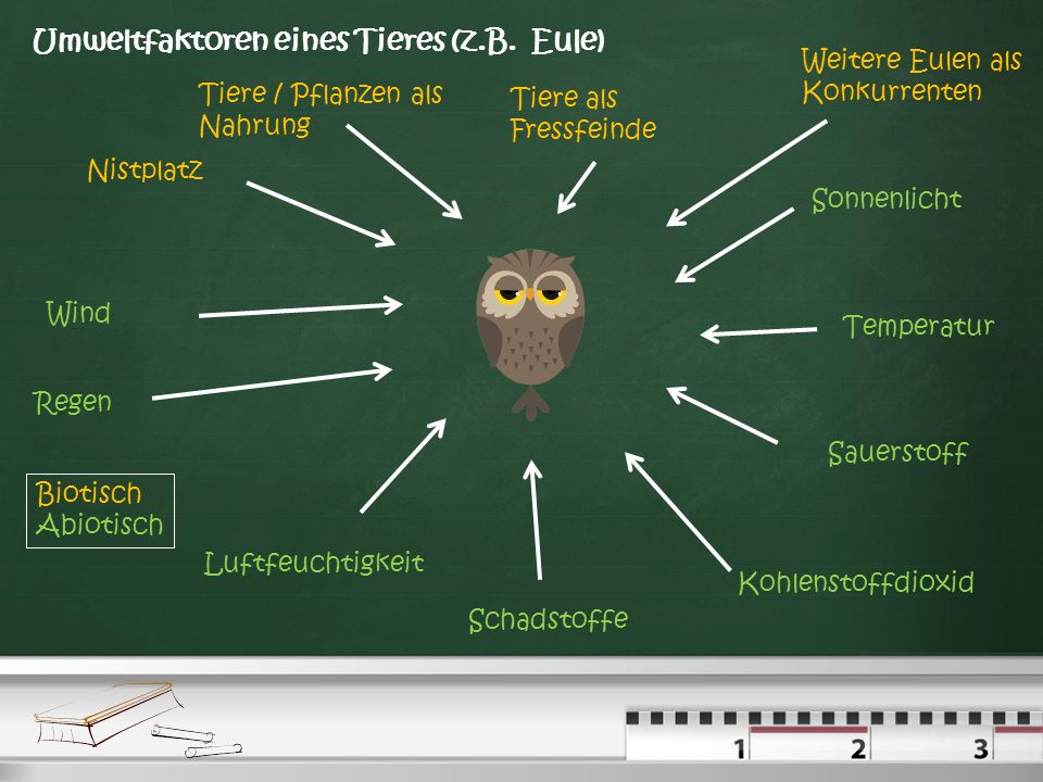 Umweltfaktoren eines Tieres (z.B. Eule)
