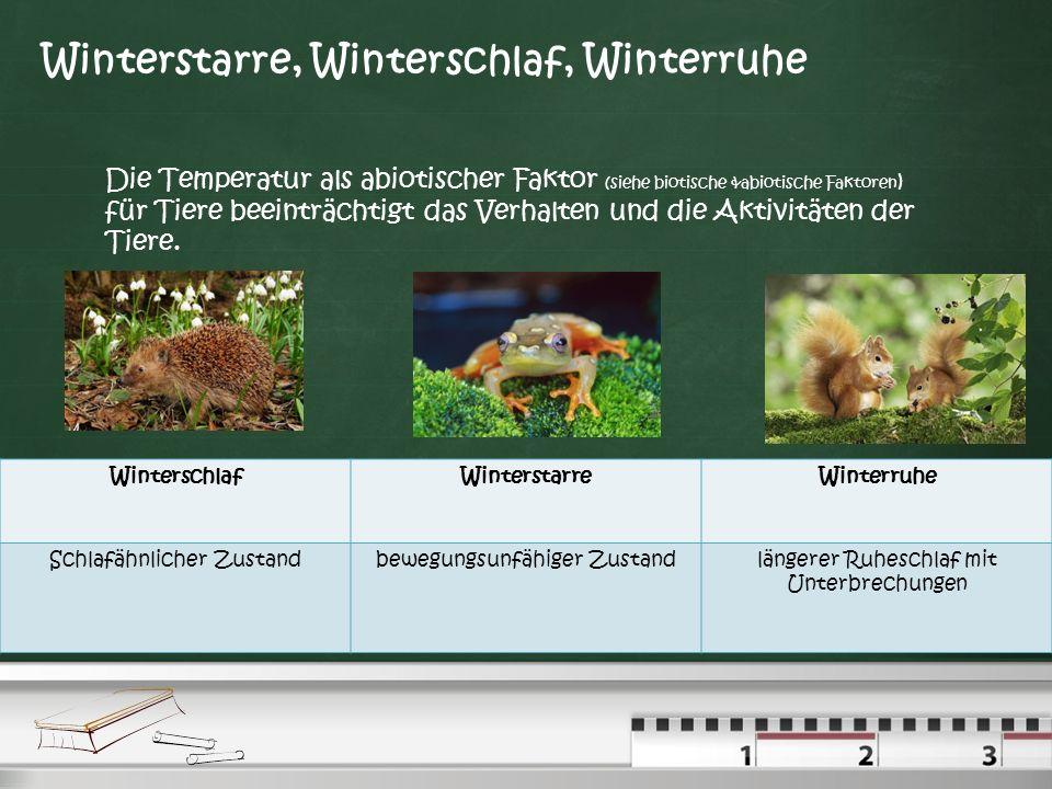 Winterstarre, Winterschlaf, Winterruhe