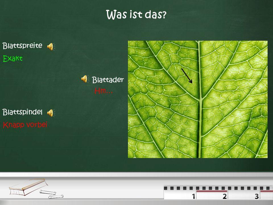 Was ist das Blattspreite Exakt Blattader Hm… Blattspindel