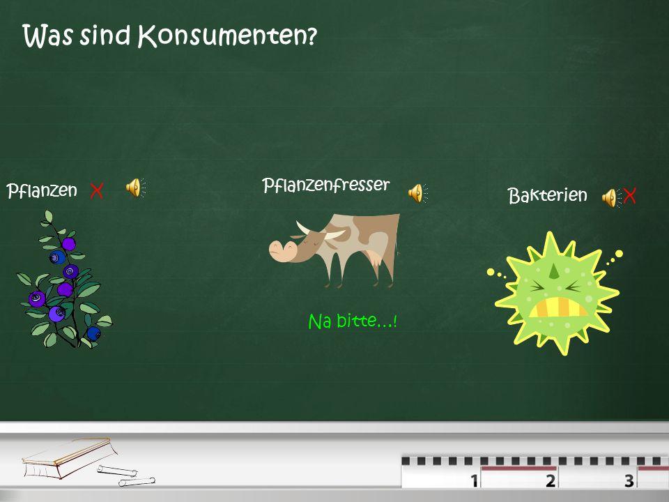 Was sind Konsumenten Pflanzenfresser Pflanzen X Bakterien X