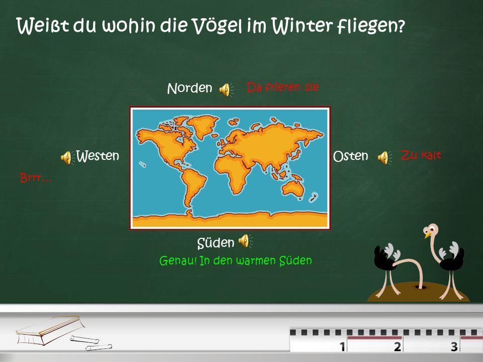 Weißt du wohin die Vögel im Winter fliegen