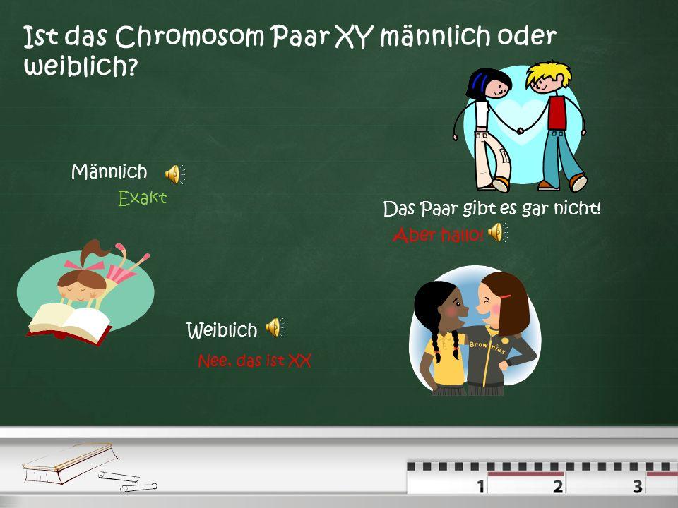 Ist das Chromosom Paar XY männlich oder weiblich