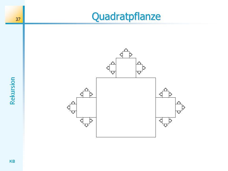 Quadratpflanze