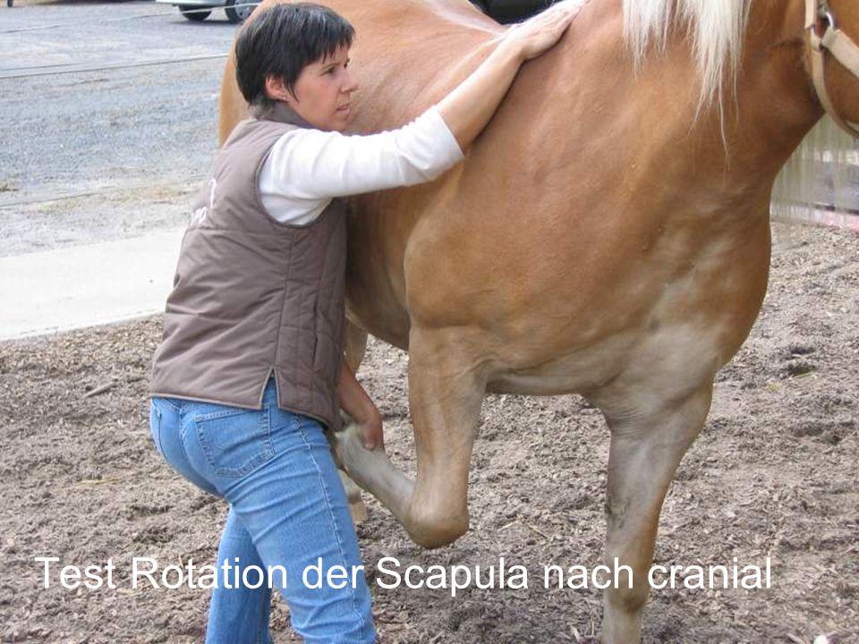Test Rotation der Scapula nach cranial