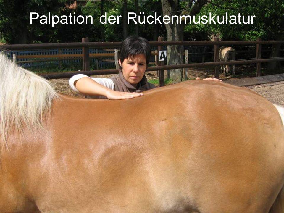 Palpation der Rückenmuskulatur