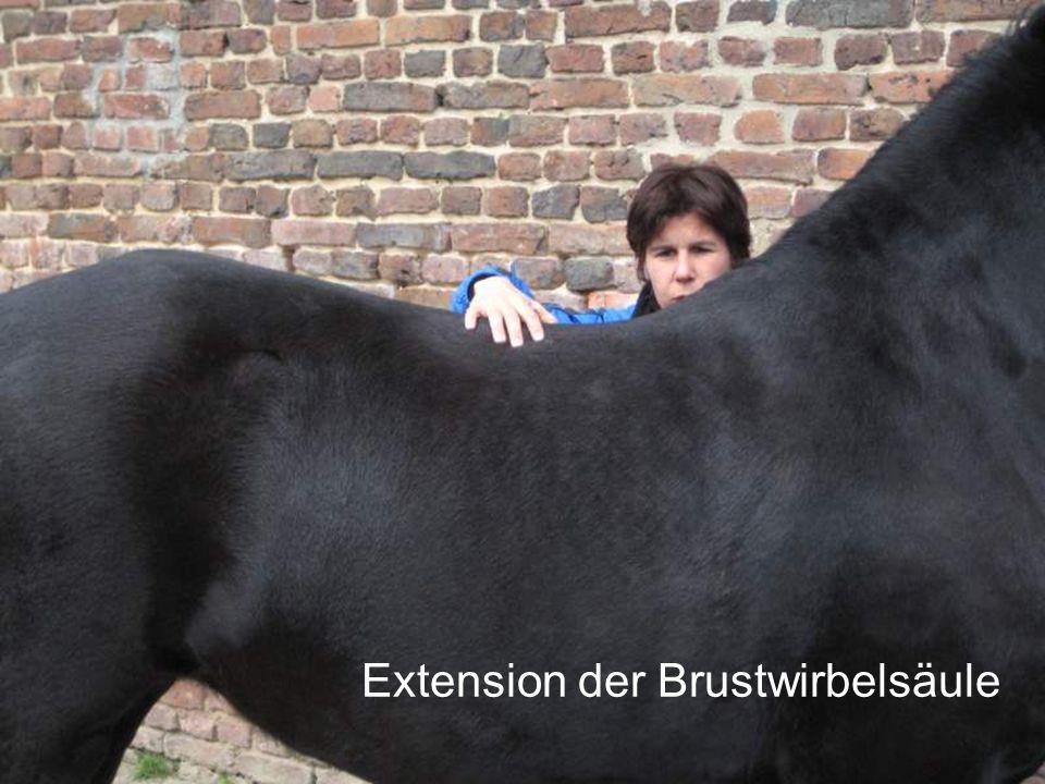 Extension der Brustwirbelsäule