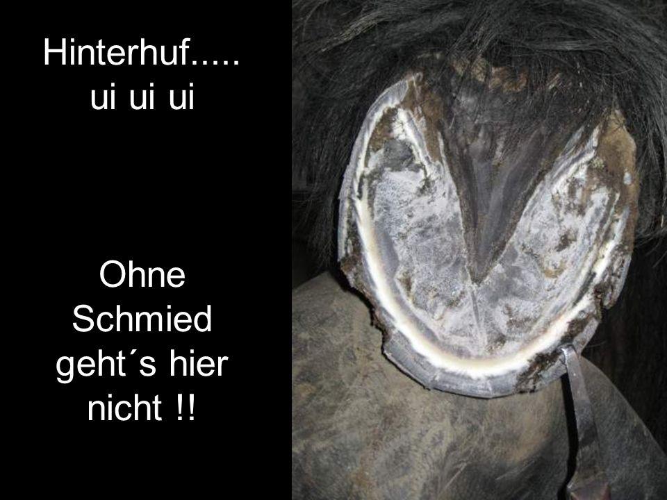 Hinterhuf..... ui ui ui Ohne Schmied geht´s hier nicht !!