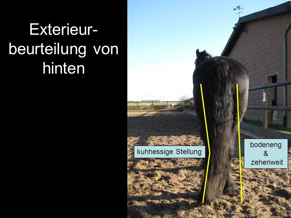 Exterieur-beurteilung von hinten