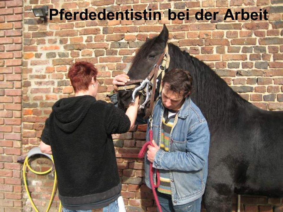 Pferdedentistin bei der Arbeit