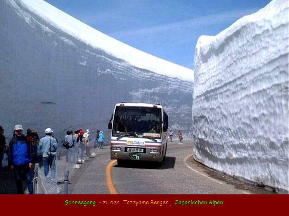 Schneegang - zu den Tateyama Bergen , Japanischen Alpen.