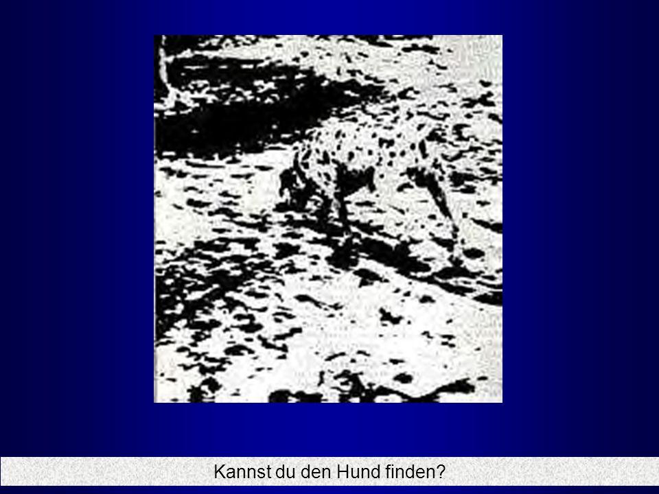 Kannst du den Hund finden