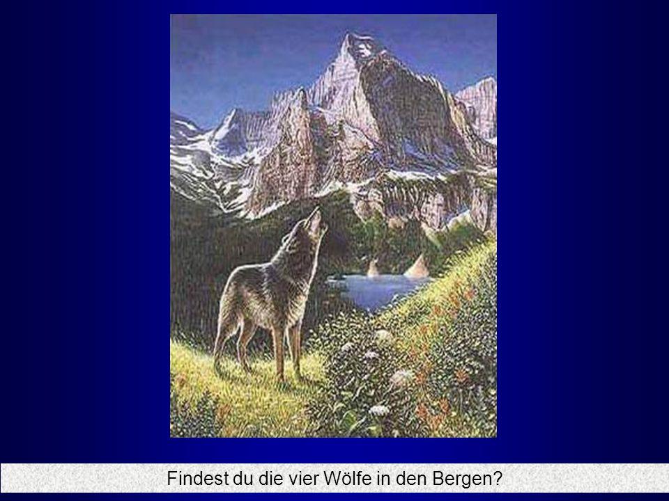 Findest du die vier Wölfe in den Bergen