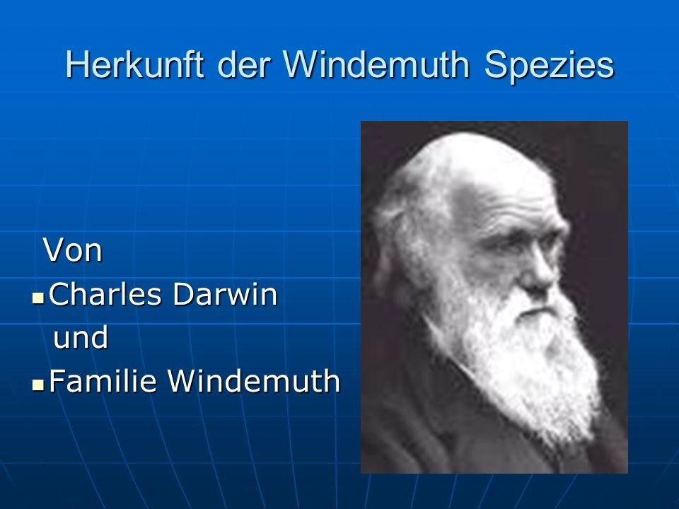 Herkunft der Windemuth Spezies