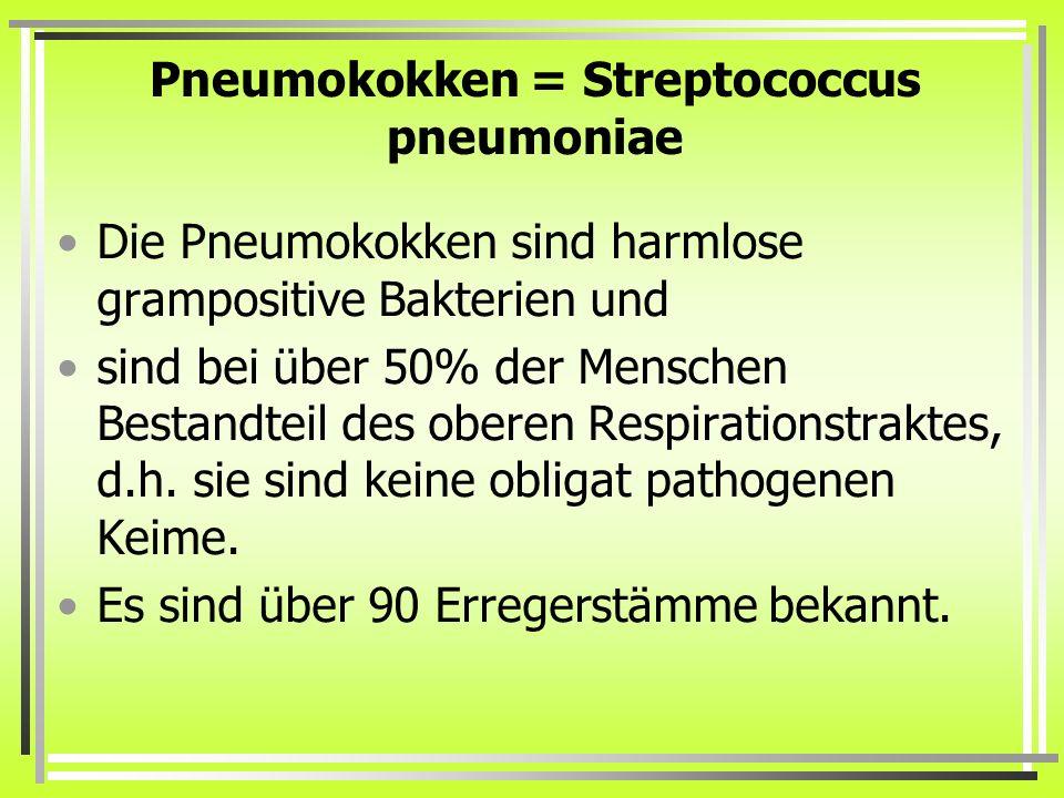 Pneumokokken = Streptococcus pneumoniae