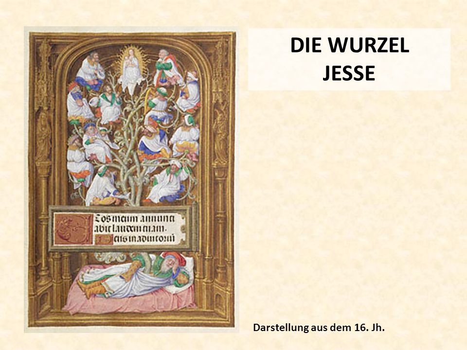DIE WURZEL JESSE Darstellung aus dem 16. Jh.