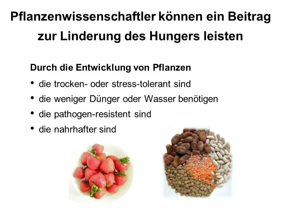 Pflanzenwissenschaftler können ein Beitrag zur Linderung des Hungers leisten