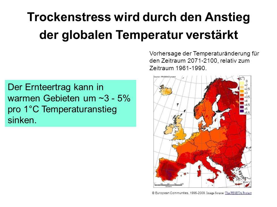 Trockenstress wird durch den Anstieg der globalen Temperatur verstärkt
