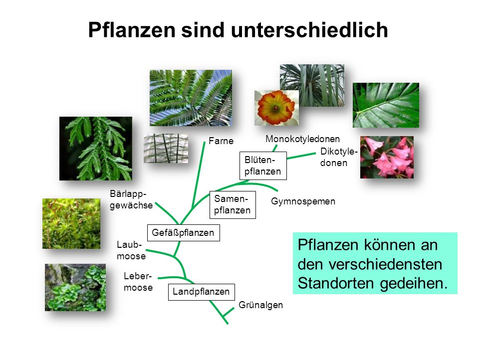 Pflanzen sind unterschiedlich