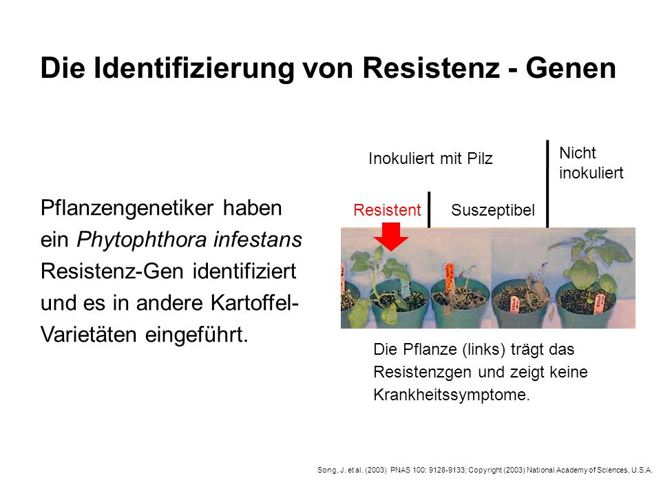 Die Identifizierung von Resistenz - Genen