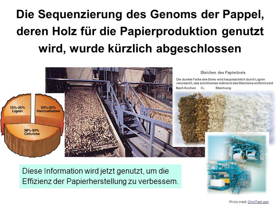 Die Sequenzierung des Genoms der Pappel, deren Holz für die Papierproduktion genutzt wird, wurde kürzlich abgeschlossen