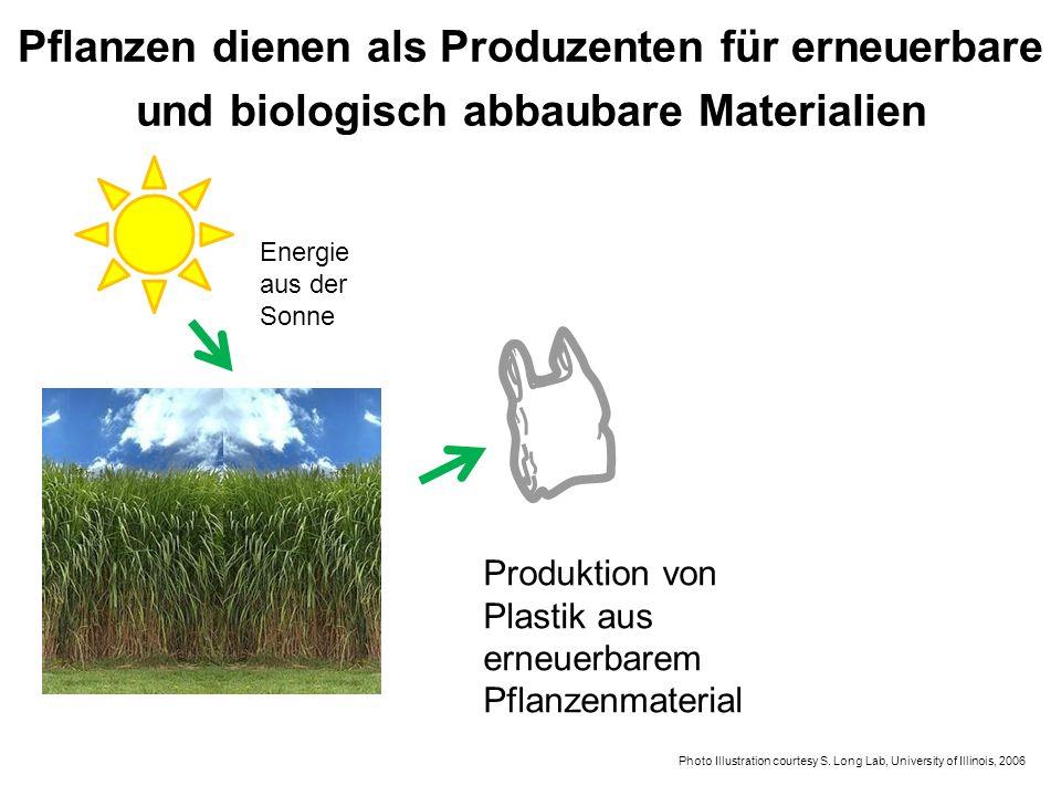 Pflanzen dienen als Produzenten für erneuerbare