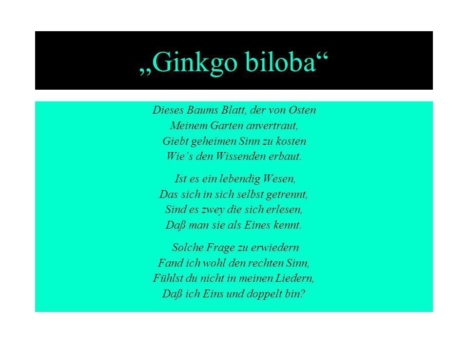 """""""Ginkgo biloba Dieses Baums Blatt, der von Osten"""