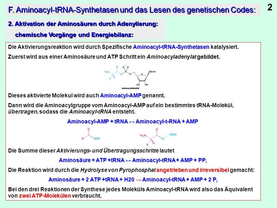 2 F. Aminoacyl-tRNA-Synthetasen und das Lesen des genetischen Codes: