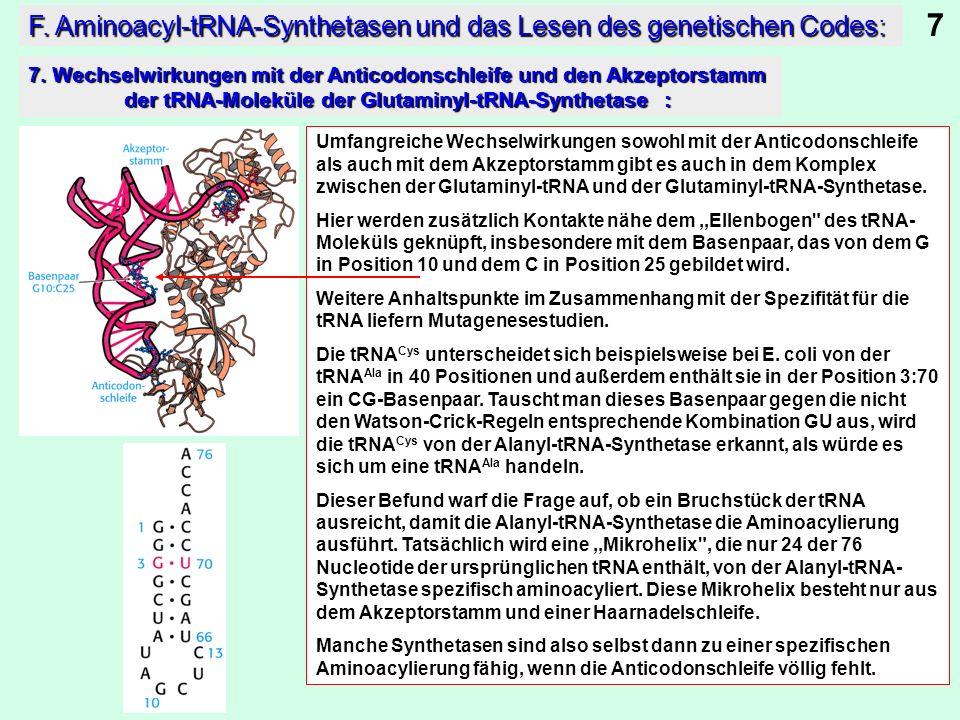 7 F. Aminoacyl-tRNA-Synthetasen und das Lesen des genetischen Codes: