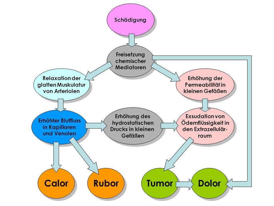 Calor Rubor Tumor Dolor