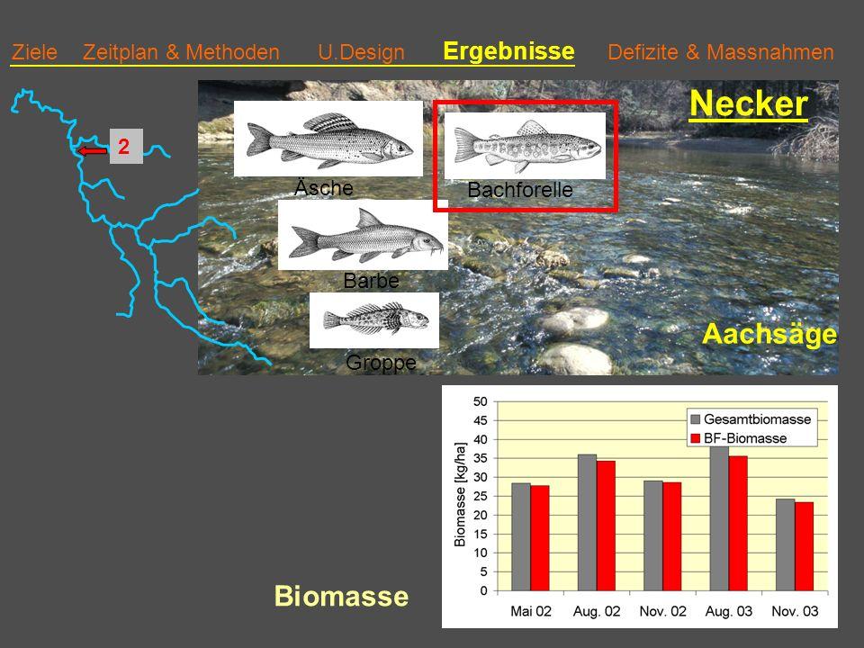 Necker Aachsäge Biomasse