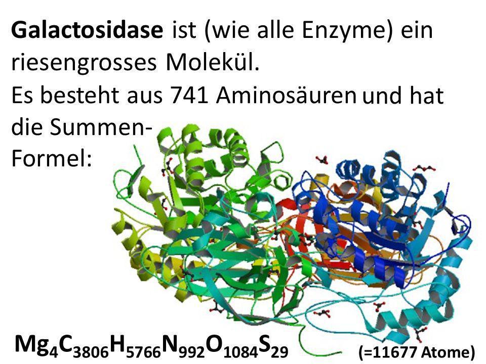 Galactosidase ist (wie alle Enzyme) ein riesengrosses Molekül.