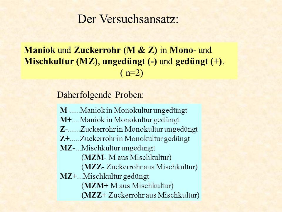 Der Versuchsansatz: Maniok und Zuckerrohr (M & Z) in Mono- und Mischkultur (MZ), ungedüngt (-) und gedüngt (+).