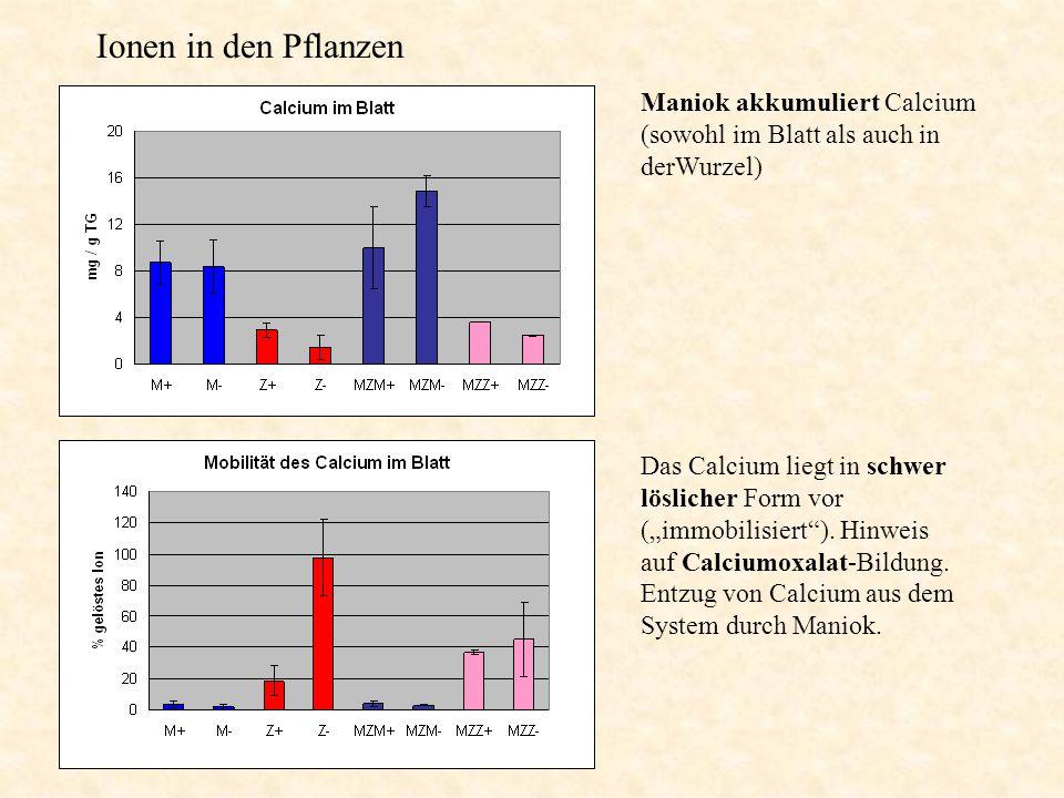 Ionen in den Pflanzen Maniok akkumuliert Calcium (sowohl im Blatt als auch in derWurzel)