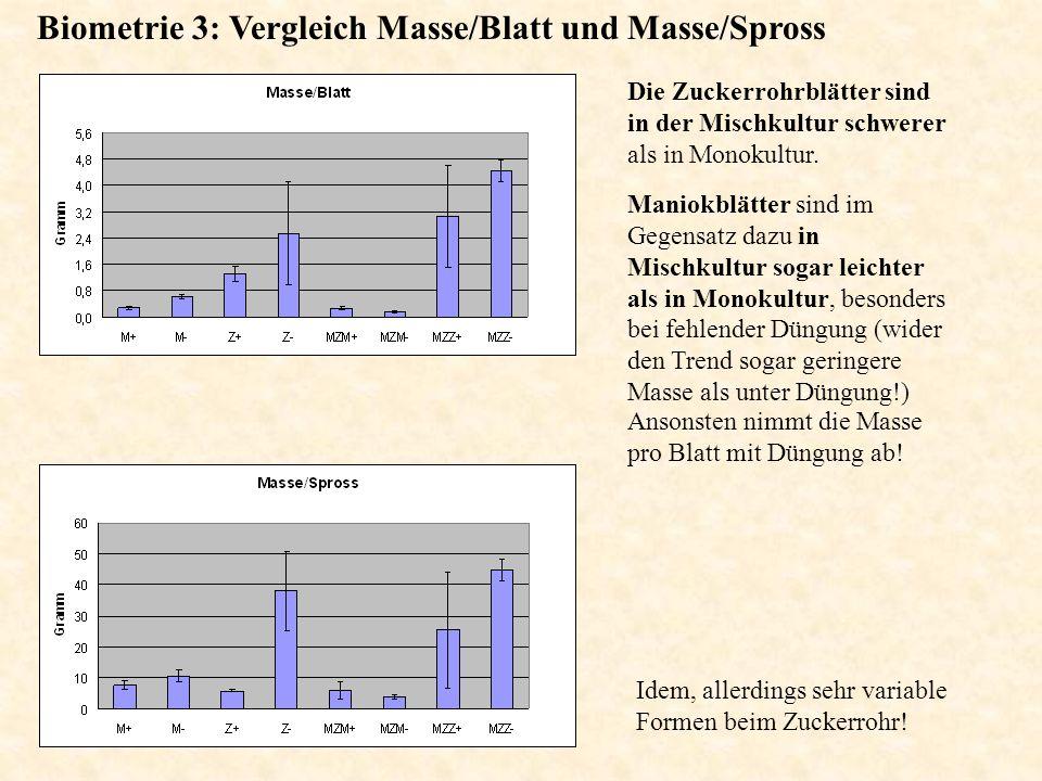 Biometrie 3: Vergleich Masse/Blatt und Masse/Spross