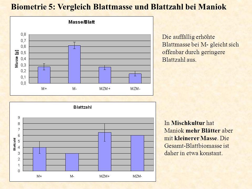 Biometrie 5: Vergleich Blattmasse und Blattzahl bei Maniok