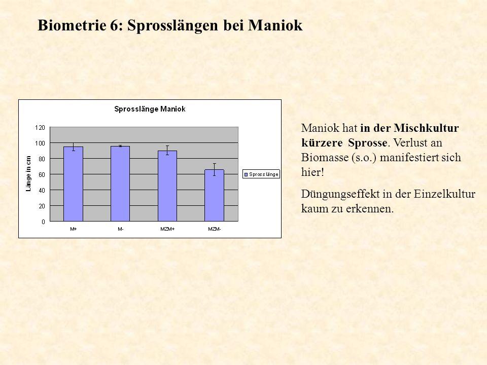 Biometrie 6: Sprosslängen bei Maniok