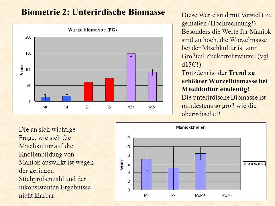 Biometrie 2: Unterirdische Biomasse