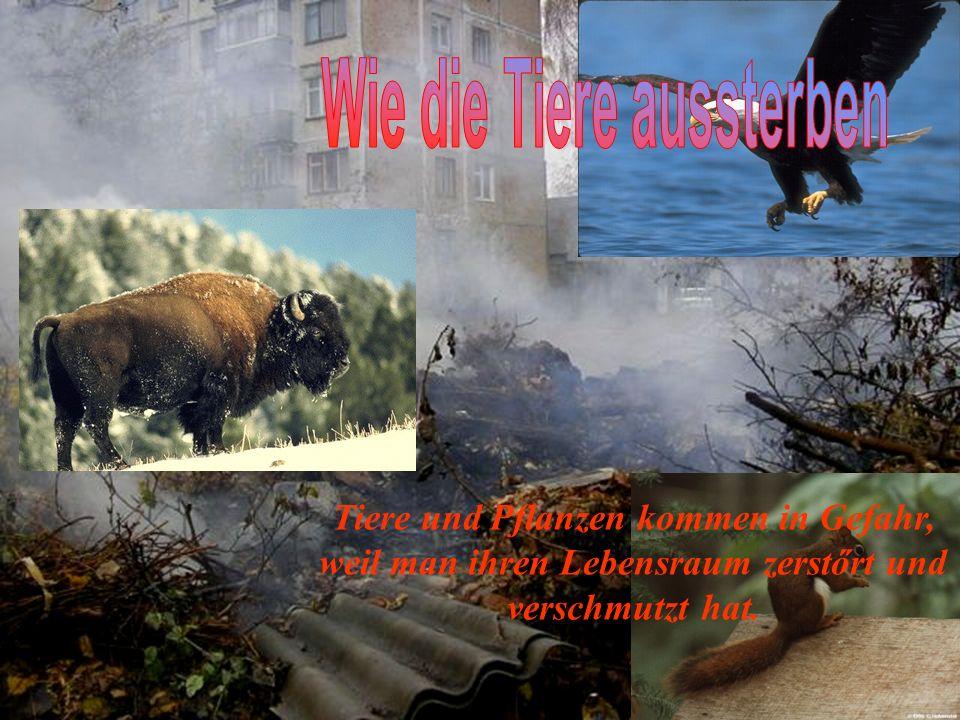 Wie die Tiere aussterben