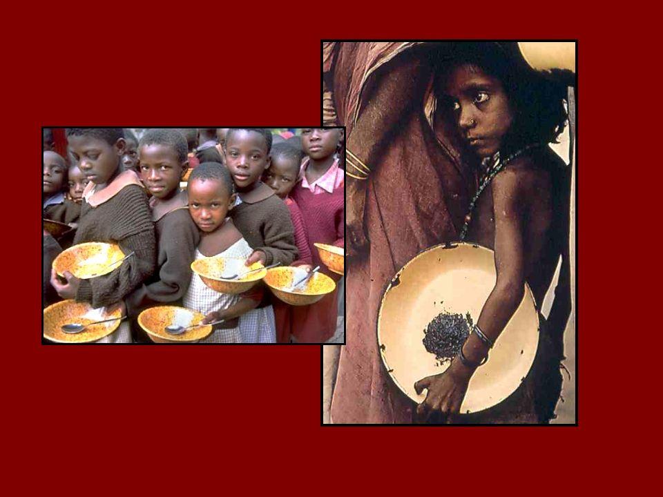 Zu diesem Zeitpunkt sind wir schlecht auf einen starken Rückgang der weltweiten Nahrungsmittelversorgung vorbereitet. Im Januar dieses Jahres entsprachen die weltweiten Getreidevorräte einem Verbrauch von ca. 60 Tagen – niedriger als je zuvor in den letzten 50 Jahren und dramatisch