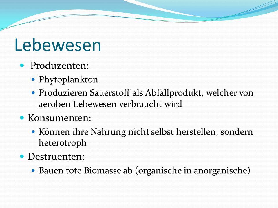 Lebewesen Produzenten: Konsumenten: Destruenten: Phytoplankton