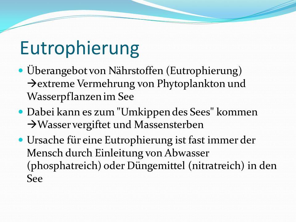 Eutrophierung Überangebot von Nährstoffen (Eutrophierung) extreme Vermehrung von Phytoplankton und Wasserpflanzen im See.
