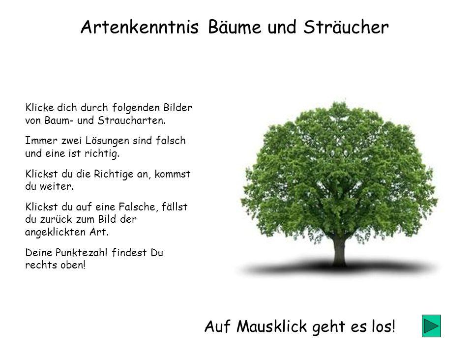 Artenkenntnis Bäume und Sträucher