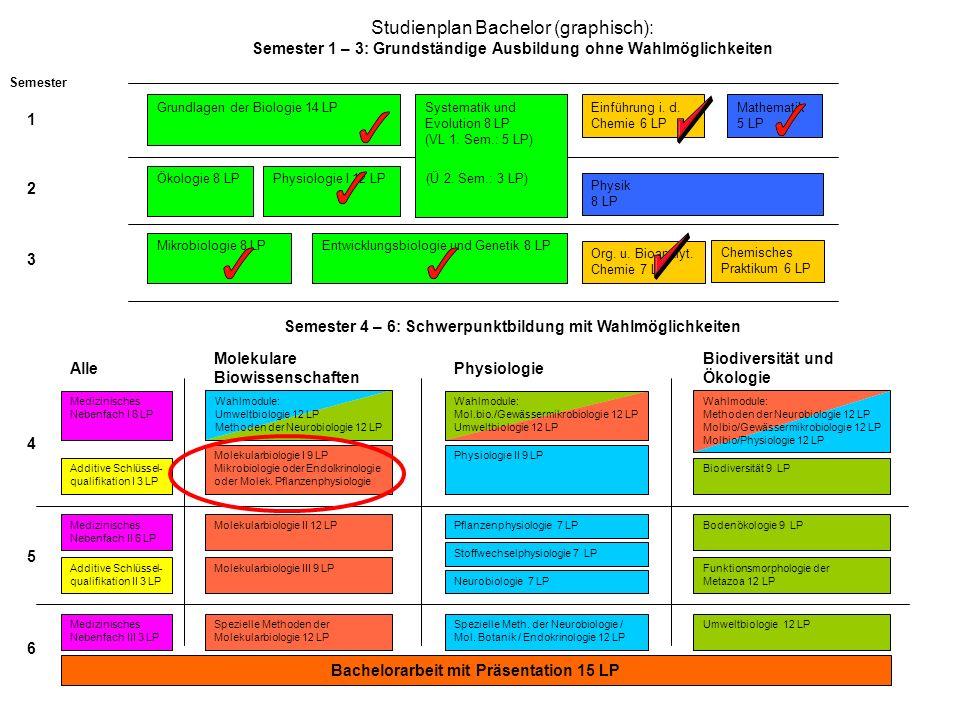 Studienplan Bachelor (graphisch): Semester 1 – 3: Grundständige Ausbildung ohne Wahlmöglichkeiten