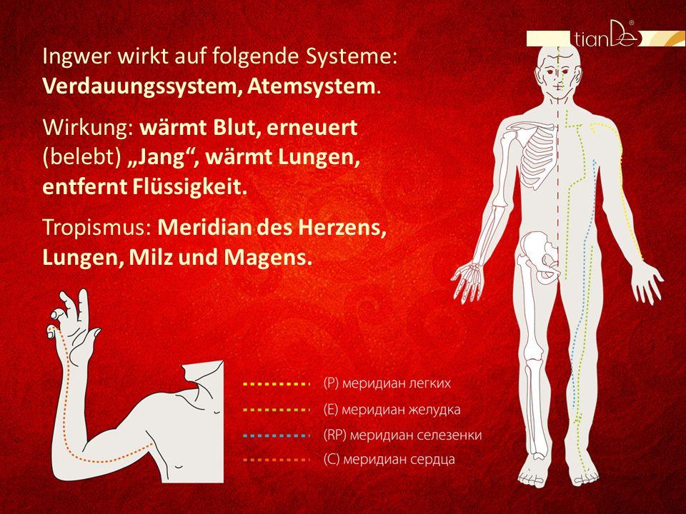 Ingwer wirkt auf folgende Systeme: Verdauungssystem, Atemsystem.