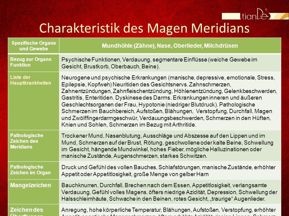 Charakteristik des Magen Meridians