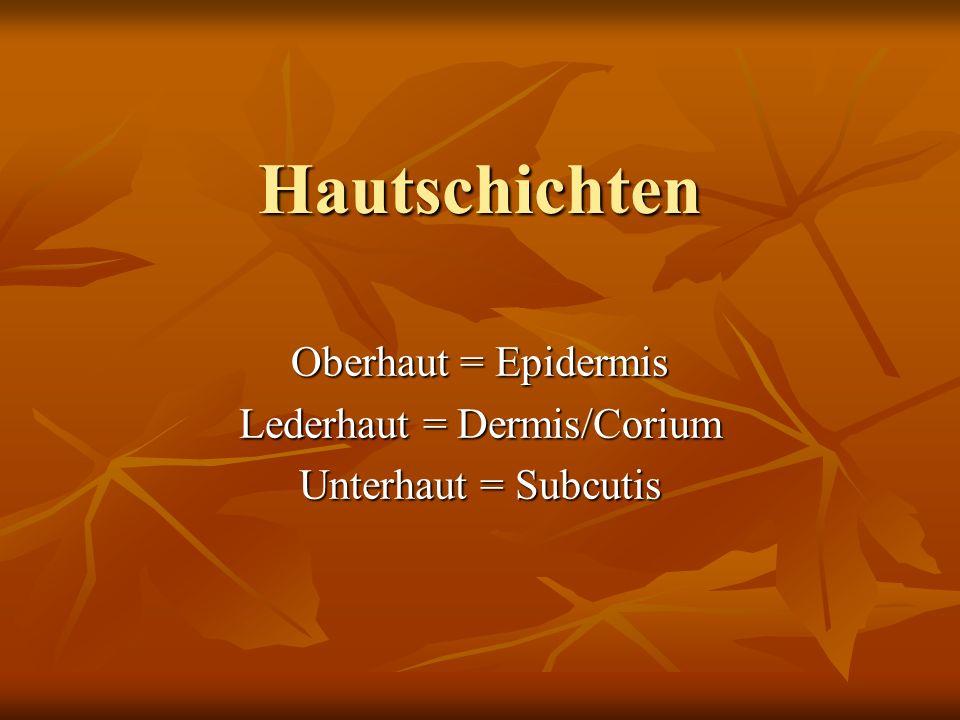 Oberhaut = Epidermis Lederhaut = Dermis/Corium Unterhaut = Subcutis